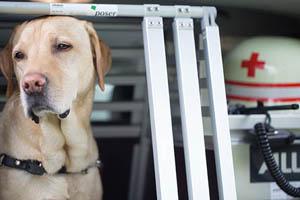 Rettungshundestaffel - Ihr Browser unterdrückt die Anzeige der Bilder. Bitte Grafiken zulassen oder Bilder anzeigen lassen.